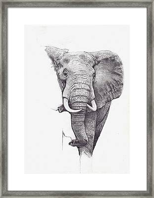 African Elephant  Framed Print by Andrew Harrison