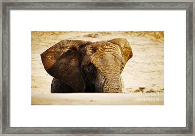 African Elephant Behind A Hill Framed Print