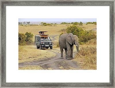 African Elephant Framed Print by Bildagentur-online/mcphoto-schulz
