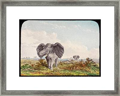 African Elephant Framed Print by Gustoimages/science Photo Libbrary