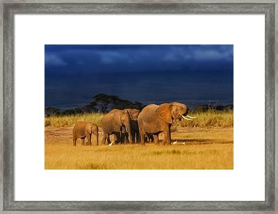 African Elephant Herd Framed Print