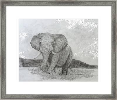 African Elephant Framed Print by Jim Hubbard