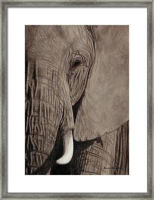 African Elephant Painting Framed Print by Rachel Stribbling