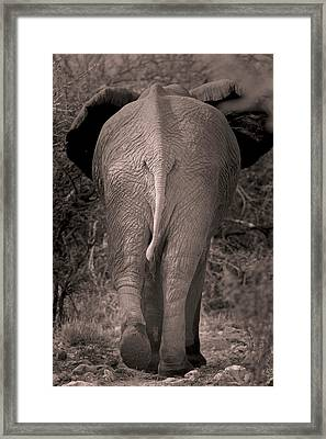 African Elephant Framed Print by Simon Booth