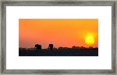 Framed Print featuring the photograph African Elephant Sunset by Amanda Stadther
