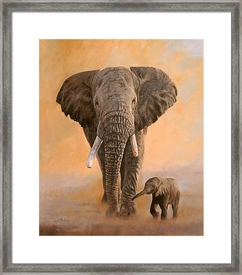 African Elephants Framed Print by David Stribbling