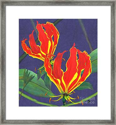 African Flame Lily Framed Print by Sylvie Heasman