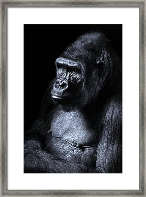 African Gorilla In Deep Thought Framed Print