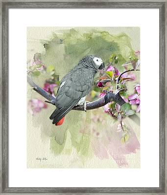 African Gray Among The Blossoms Framed Print