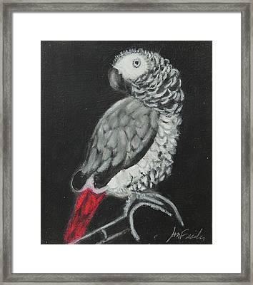 Framed Print featuring the painting African Grey by Jeanne Fischer