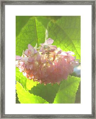 African Hemp Framed Print by Alfred Ng