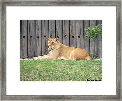 African Lady Boss Framed Print by Andrew Conrad