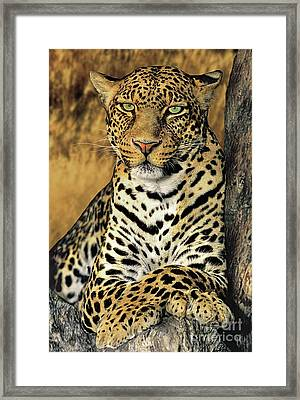 African Leopard Portrait Wildlife Rescue Framed Print by Dave Welling