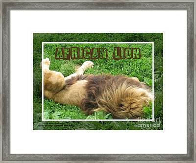 African Lion Framed Print by Margaret Newcomb