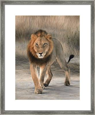 African Lion Painting Framed Print