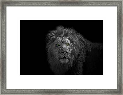Framed Print featuring the photograph African Lion by Peter Lakomy