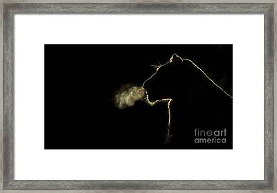 African Lioness Breath Sabi Sands South Framed Print