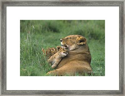 African Lions Mother And Cubs Tanzania Framed Print by Dave Welling