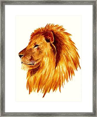 African Male Lion Framed Print by Michael Vigliotti