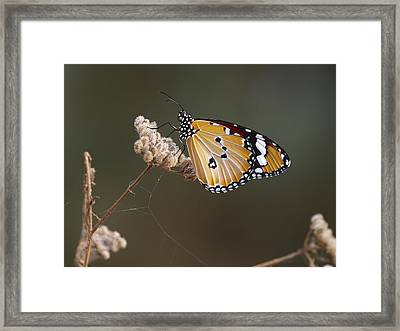 Framed Print featuring the photograph African Monarch by Meir Ezrachi