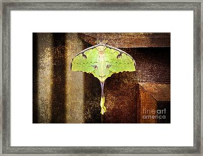 African Moon Moth 2 Framed Print by Andee Design