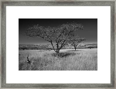African Oak Framed Print by Scott Moore