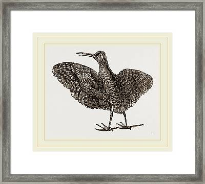 African Painted Snipe Framed Print by Litz Collection