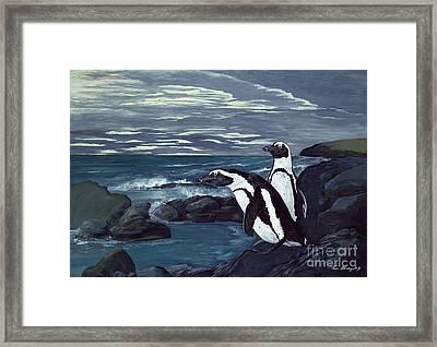African Penguin Framed Print