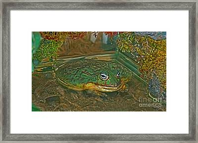 African Pixie Frog In Water Framed Print