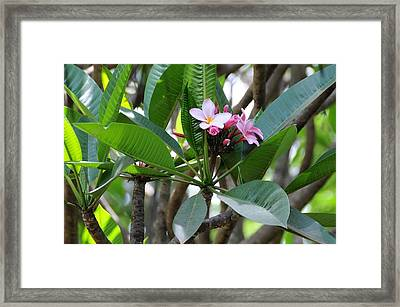 African Series Flower In Tree Framed Print by Katherine Green