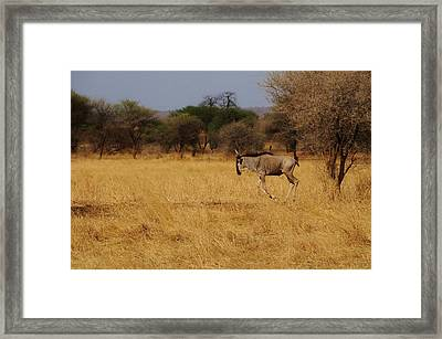 African Series Grass Framed Print by Katherine Green