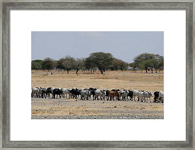 African Series Framed Print by Katherine Green