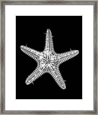 African Star Framed Print by William A Conklin