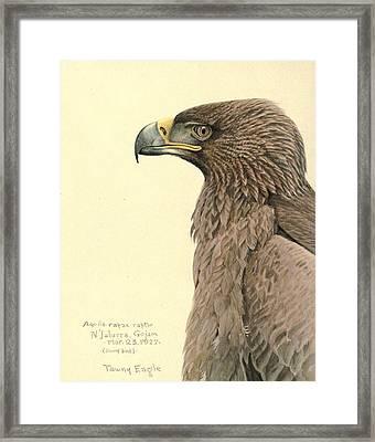 African Tawny Eagle Framed Print