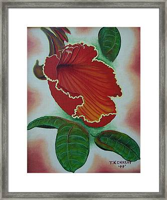 African  Tulip Tree Framed Print