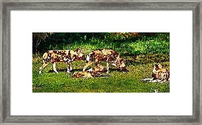 African Wild Dog Family Framed Print by Miroslava Jurcik