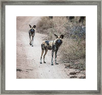 African Wild Dogs Framed Print by Craig Brown
