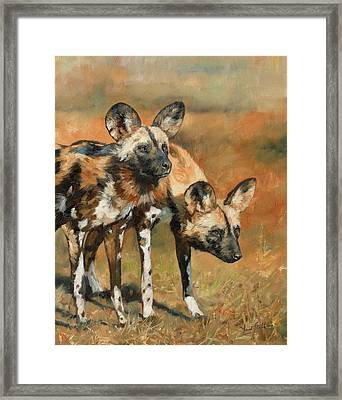 African Wild Dogs Framed Print by David Stribbling