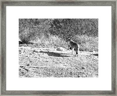 After A Long Day Framed Print by Linda Busch