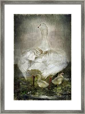 After A Stormy Night Framed Print by Adelita Rog