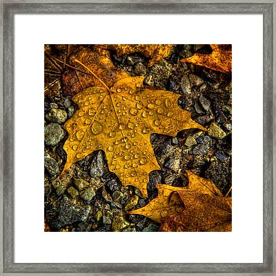 After An Autumn Rain Framed Print