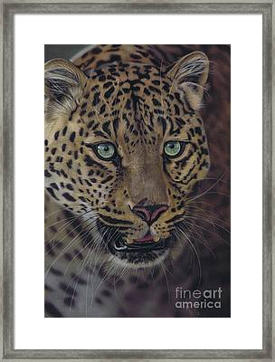 After Dark All Cats Are Leopards Framed Print