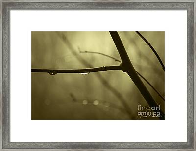 After It Rained Framed Print by David Gordon