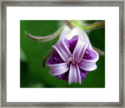 After Morning Glory Framed Print