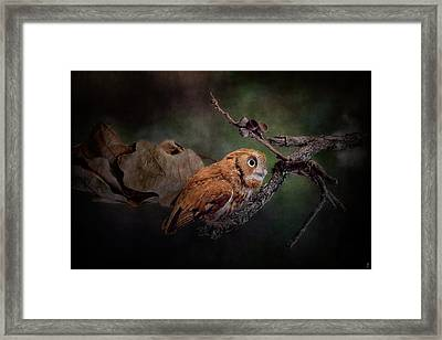 After The Acorns Fall Framed Print