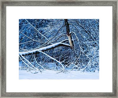 After The Icy Rain - Featured 3 Framed Print by Alexander Senin