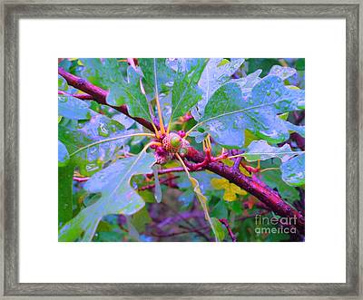 After The Morning Rain Framed Print by Ann Johndro-Collins