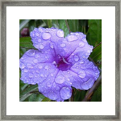 After The Rain #1 Framed Print by Robert ONeil