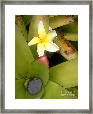 Fallen From The Rain  Framed Print