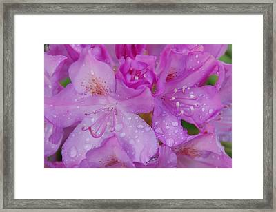 After The Rain Framed Print by Aimee L Maher Photography and Art Visit ALMGallerydotcom